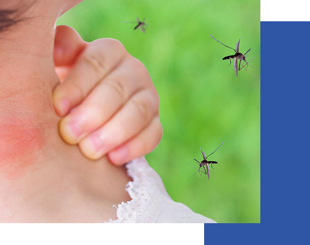 Person Swatting Mosquitoes | Collier Mosquito Control District