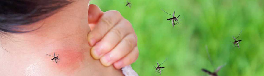 Mosquitoes can mean an increased threat of disease | Collier Mosquito Control District