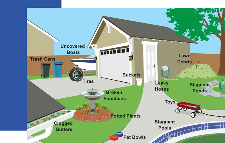 Informational Graphic Showing places Mosquitoes can grow in standing water in your yard | Collier Mosquito Control District